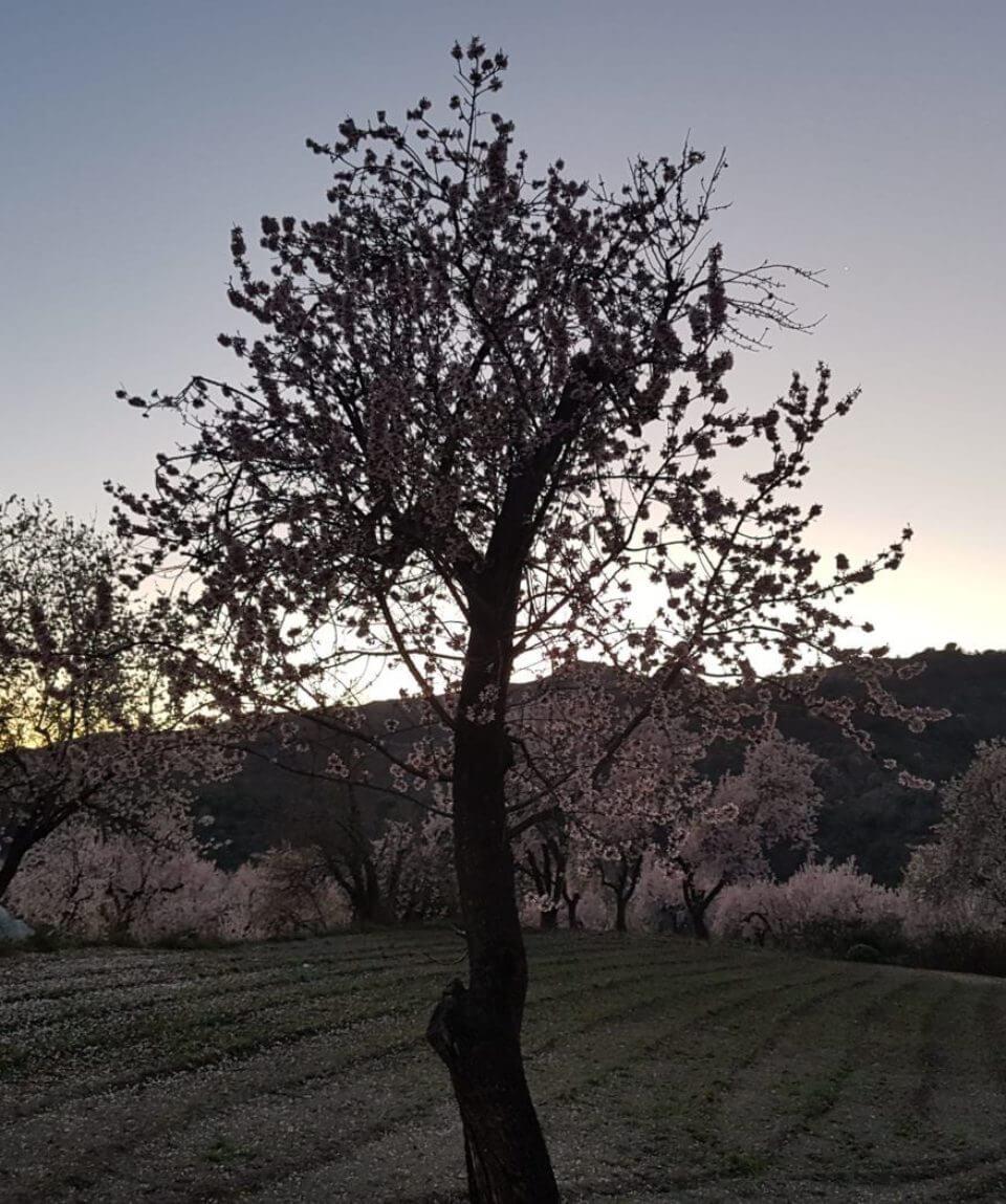 Blossom Las Alpujarras