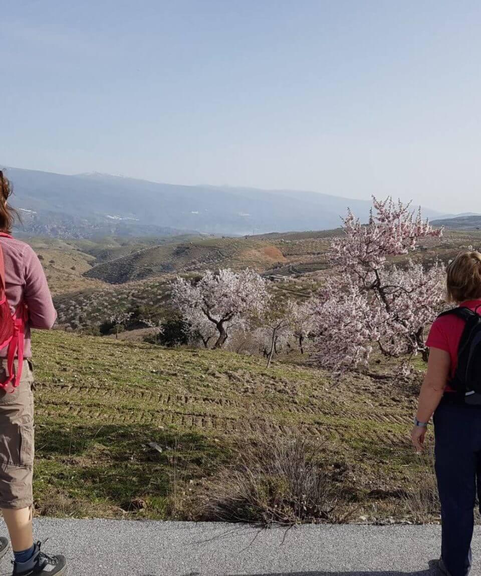 Walking In Blossom