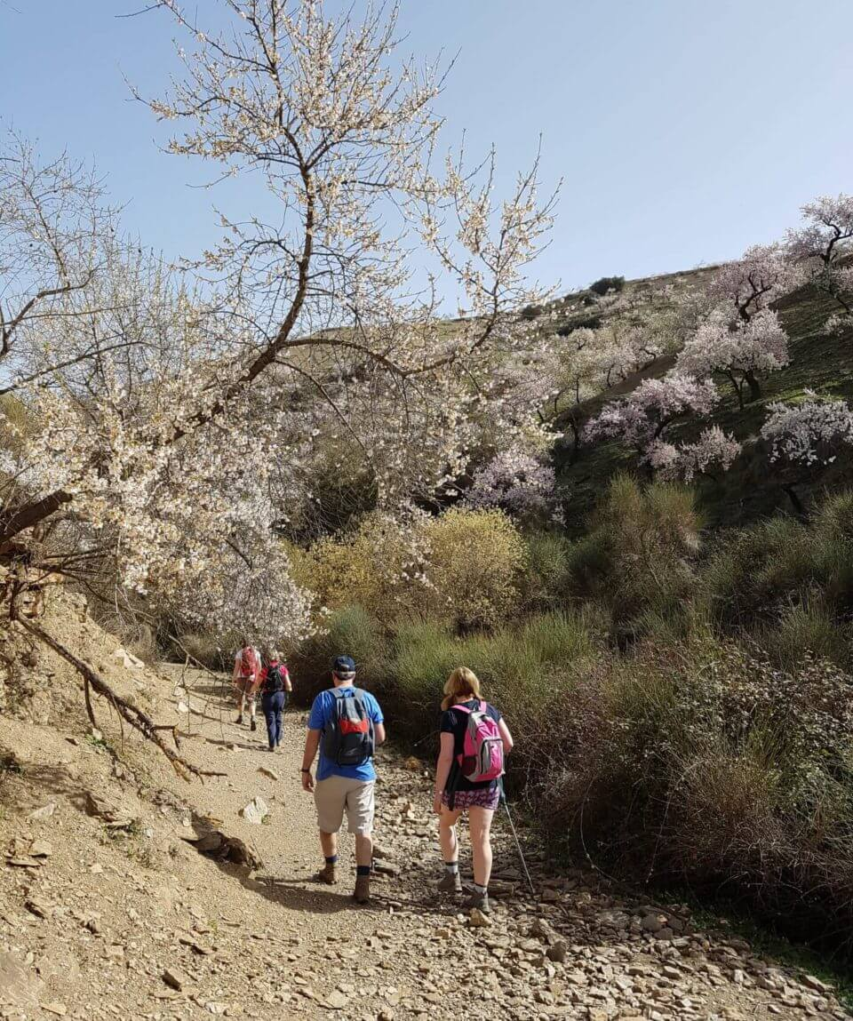 Walking In Blossom Sierra Nevada