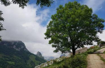 A Tree Picos de Europa